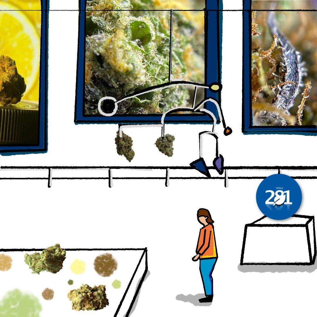 Yipalli 281 Media Cannabis Gallery